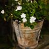 Flower Bucket - Copyright 2015 Steve Leimberg - UnSeenImages Com _Z2A6258