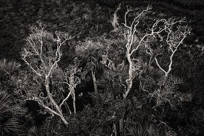 Trees Copyright 2020 Steve Leimberg UnSeenImages Com _0048