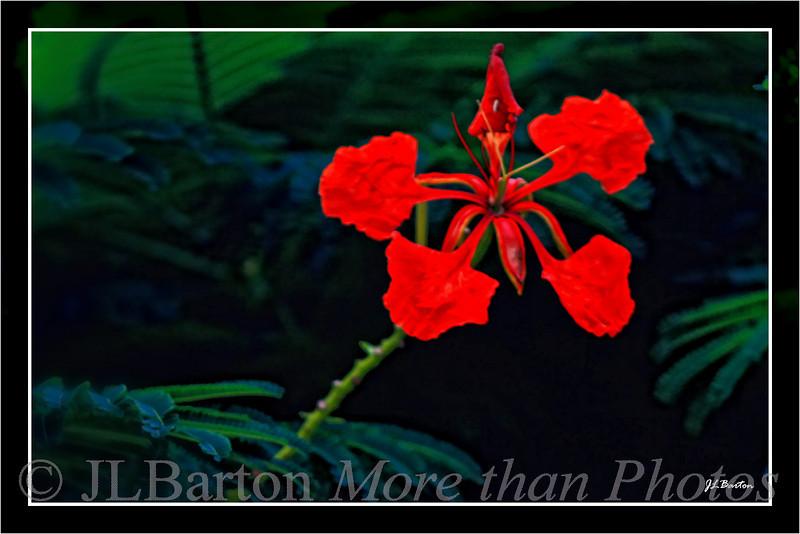 Flower - need name seen around Boca Grande, Gasparilla Island