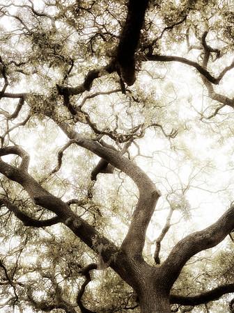 Trees  Savannah