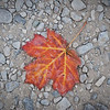 "<font size=""5"" font="""" face=""trajan pro, Copperplate Gothic Bold""><b>Winter's Coming</b></font> <font face=""trajan pro"">Fallen Leaf on Ground Glen Arbor, Michigan</font>"