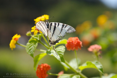 butterfly in Rhodes, Greece