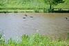 6x4 #9755 (ducks fly over lake)