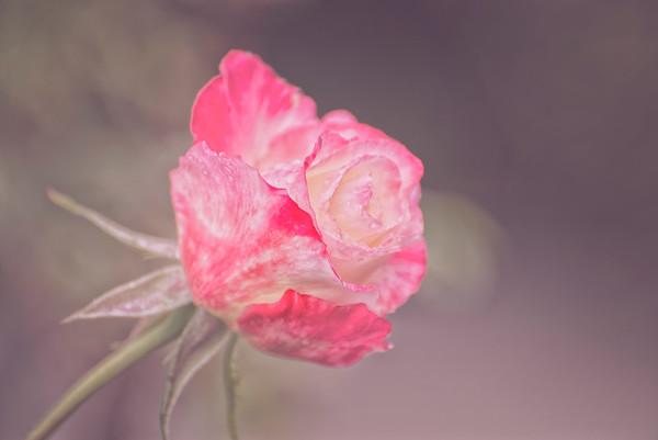 Flowers,  Beauty, Eye Candy