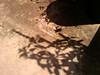 basil and mint shadows original