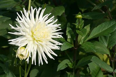 flowers_best of II