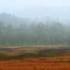 Layers of muted color on a foggy morning in Cades Cove, Great Smoky Mountains.