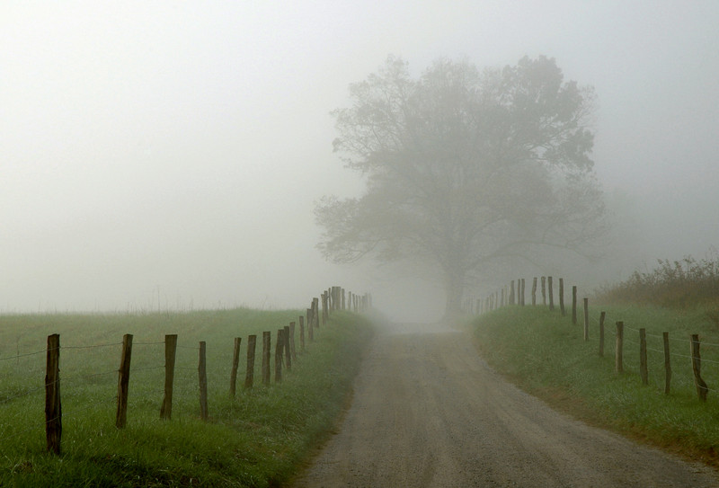 Sparks Lane in Cades Cove on a foggy morning.