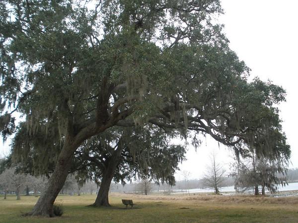 Foggy Morning in Brazos Bend