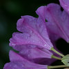 Purple Magenta Flower Macro