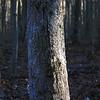 Tree Forest Light