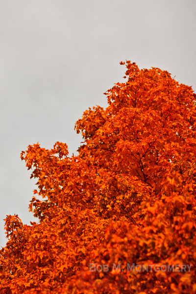 Photo of the Day 10-02-10 - Fiery Contrast