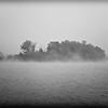 Island Forest Fog