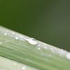Leaf Macro water droplets green