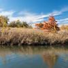 Forest Park Nov 3 2013-1295
