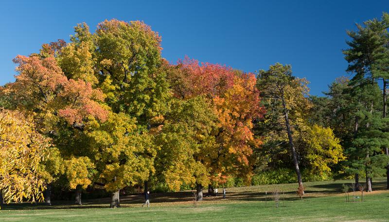 Forest Park Nov 3 2013-1290