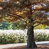 Forest Park Nov 3 2013-1291
