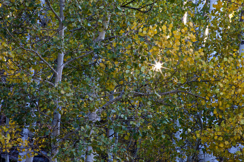 A sun burst forms through the leaves of aspen trees near Gunnison, Colorado.