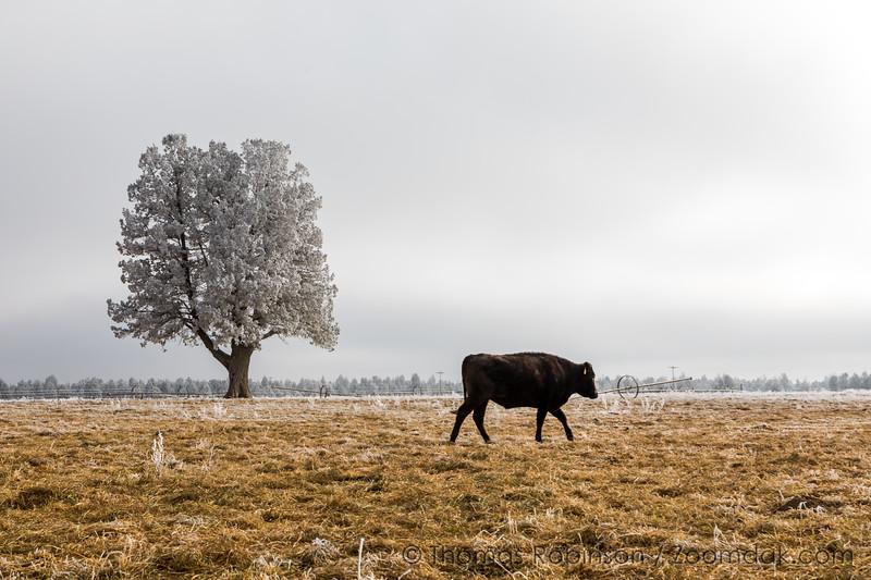Redmond Winter Farm