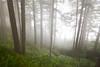Mist blows through the trees on Mt. Neahkahnie, creating an ephemeral effect.