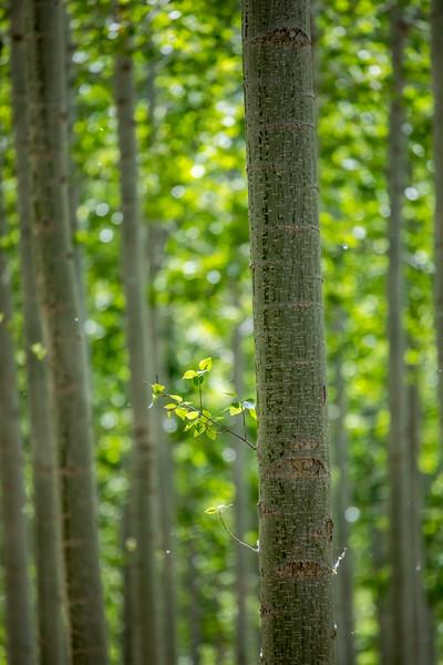 Poplar Grove Detail