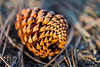 Golden Pinecone