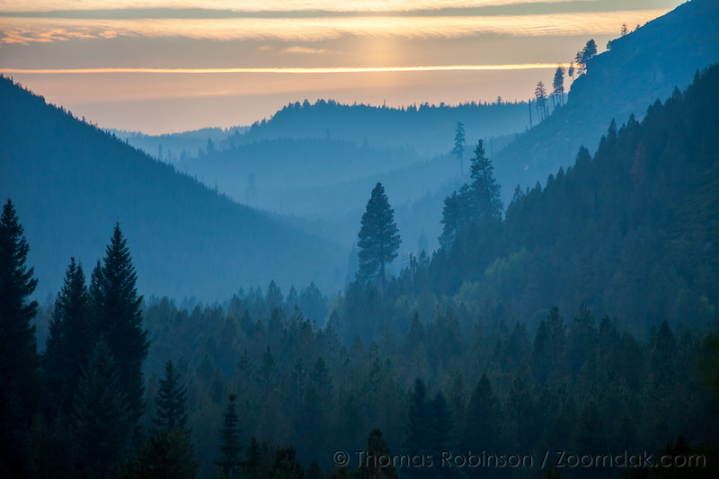 Hazy Forest at Sunset