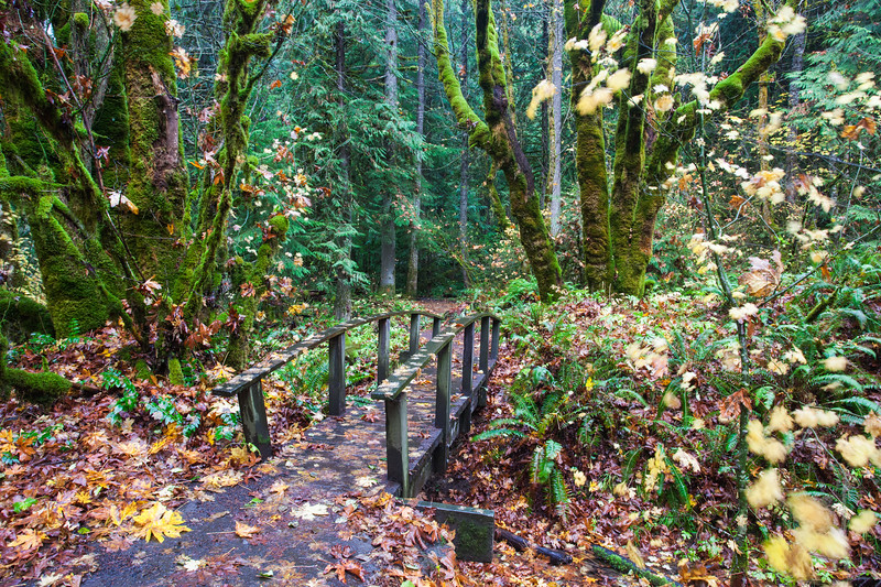 Autumn Trail in the Pacific Northwest