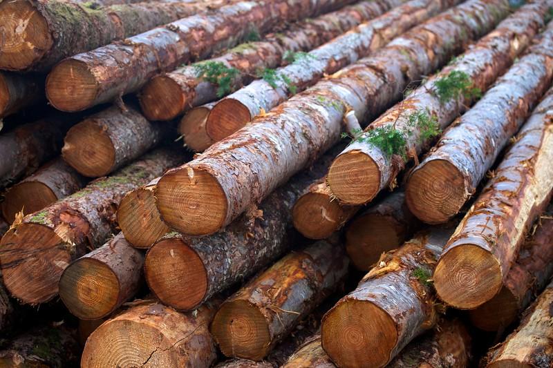 Log Stumps - Torn Earth
