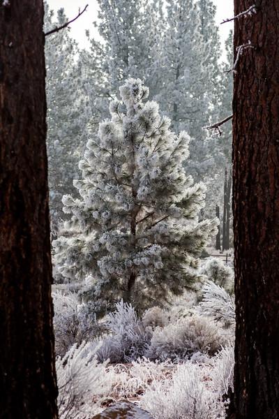 Frost Frame in Central Oregon