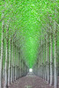 Oregon Tree Farm Vertical