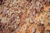 Pine Bark Texture