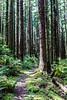 Cape Falcon Trail