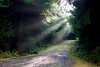 Light rays break beam through the trees and illuminate the road ahead.