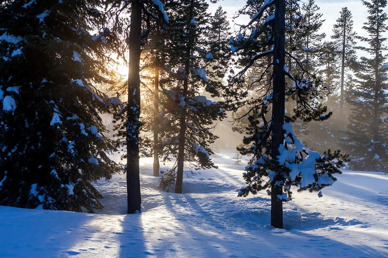 Sunlit Winter Forest