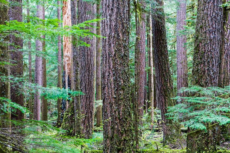 Luminant Forest