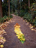 """The Coming of Fall"" nature art created with a gradient of leaves emulaties style of Andy Goldsworthy along the path in St Edward State Park, Kirkland, Washington, Andy Goldsworthy"