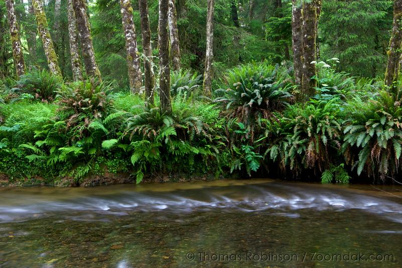 Creek Turning, Oregon
