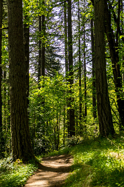 Spring Forest Trail