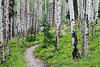 Path Thru Aspen