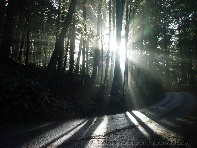 Beams of light shine through the trees along Ecola Road near Ecola State Park, Oregon