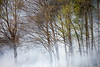 Smokey Forest