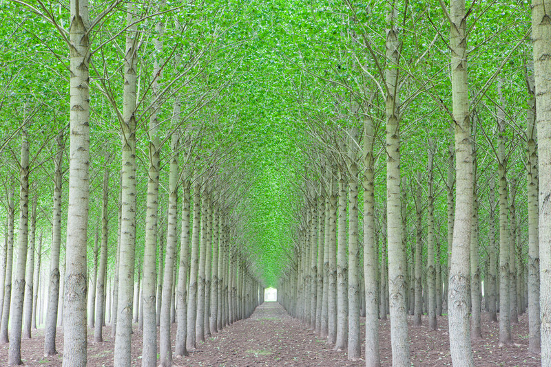 Oregon Tree Farm Horizontal