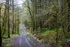 Corvallis Spring Trail