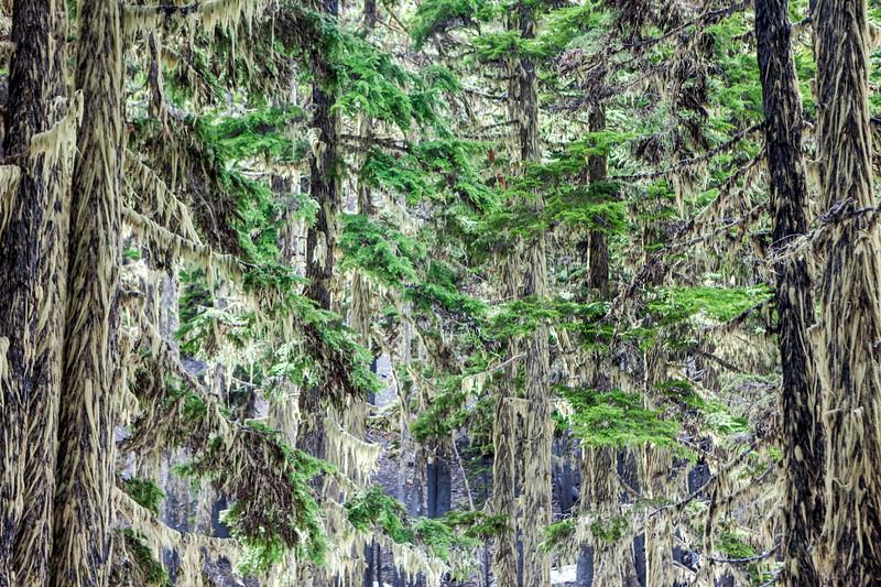 Moss Grove, Cascade Range