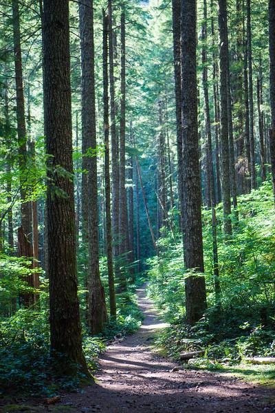 Trail to Henline Falls, Oregon