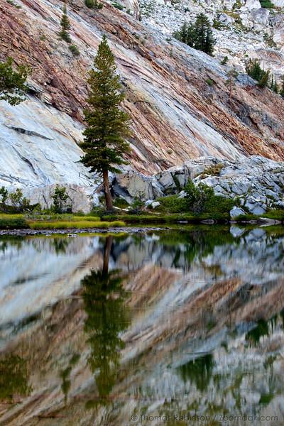 Tremendous Tree Reflection