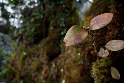 Gunung Irau - Mossy Forest