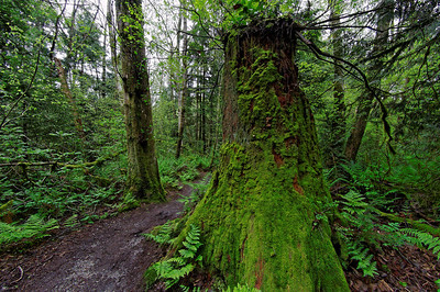Pacific Spirit Park - 27 Apr 2010