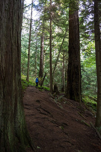 Douglas Fir Trail
